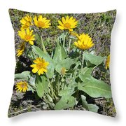 Balsamroot Throw Pillow