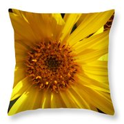 Balsamroot Flower Throw Pillow