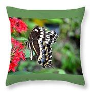 Baltimore Checker Spot Butterfly Throw Pillow