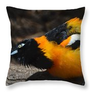 Baltimore  Oriole 2 Throw Pillow