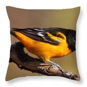Baltimore Oriole Throw Pillow
