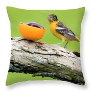 Baltimore Oriole Having Breakfast This Morning Throw Pillow