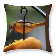 Baltimore Oriole Throw Pillow
