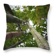 Bamboo View Throw Pillow