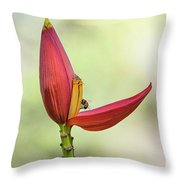 Banana Flower Bud  Throw Pillow