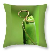 Banana Palm Frond Ready To Unfurl Throw Pillow