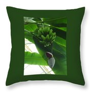 Banana Plant Kew London England Throw Pillow