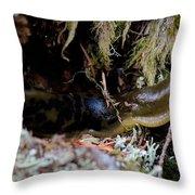 Banana Slug Eleven Throw Pillow
