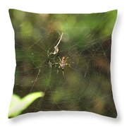 Banana Spider In Web Throw Pillow