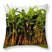 Banana Trees Throw Pillow