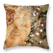 Banded Coral Shrimp Throw Pillow
