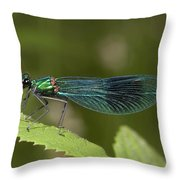 Banded Demoiselle Throw Pillow