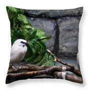 Bandit Birds Throw Pillow