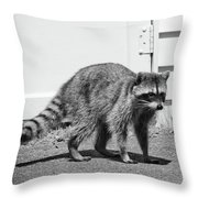 Bandit In Broad Daylight Throw Pillow
