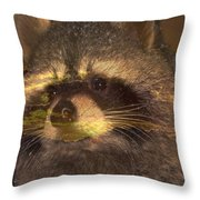 Bandit Sunset Throw Pillow