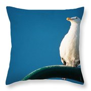 Bandon Seagull. Throw Pillow