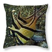 Banggai Cardinalfish With Egg, North Throw Pillow