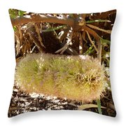Banksia Baueri Throw Pillow