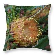 Banksia Nivea - 2 Throw Pillow