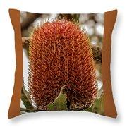 Banksia Serrata 2 Throw Pillow