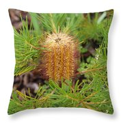 Banksia Spinulosa Throw Pillow