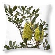 Banksia Syd02 Throw Pillow