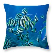 Bannerfish School Throw Pillow