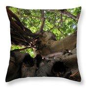 Banyan Sky Throw Pillow