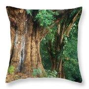 Banyan Tree Haleakala National Park Throw Pillow