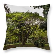Banyon Monkeypod Landscape II Throw Pillow