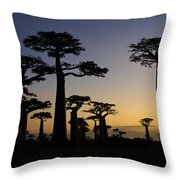 Baobab Forest At Sunset Throw Pillow