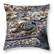 Bar-backed Partridge 2 Throw Pillow