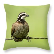 Barbed Wire Bobwhite Throw Pillow