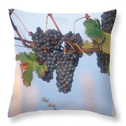 Barbera Grapes Ready For Harvest South Throw Pillow