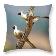 Bare-faced Go-away-birds Corythaixoides Throw Pillow