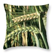 Barley, Green Stage Throw Pillow