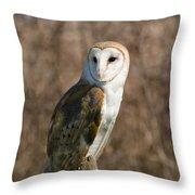 Barn Owl 2 Throw Pillow