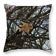 Barn Owl In A Tree Throw Pillow