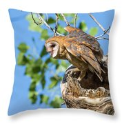 Barn Owl Owlet Climbs Out Of Nest Throw Pillow
