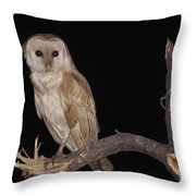Barn Owl Tyto Alba Throw Pillow