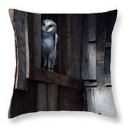 Barn Owl......i See You. Throw Pillow