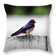 Barn Swallow At Fort Larned Throw Pillow