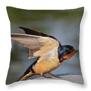 Barn Swallow Throw Pillow by Byron Varvarigos