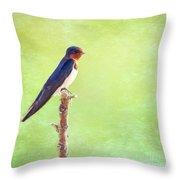Barn Swallow, Hirundo Rustica Throw Pillow