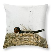 Barn Swallow Nesting Throw Pillow