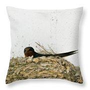 Barn Swallow Nesting Throw Pillow by Douglas Barnett