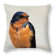 Barn Swallow Perched On A Fence Throw Pillow