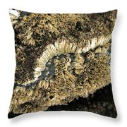 Barnacles At Low Tide Throw Pillow