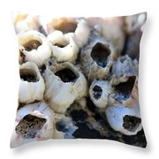 Barnicle Cluster Throw Pillow