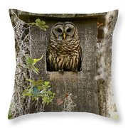 Barred Owl In Nest Box Throw Pillow